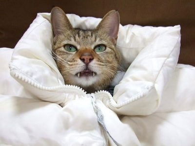ダウンジャケットにくるまれた猫