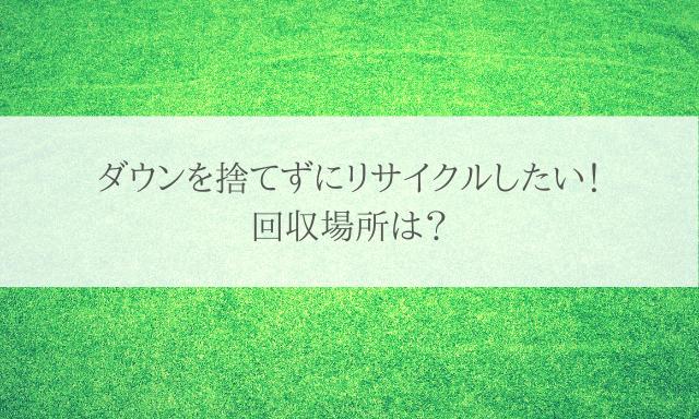 キレイな芝生